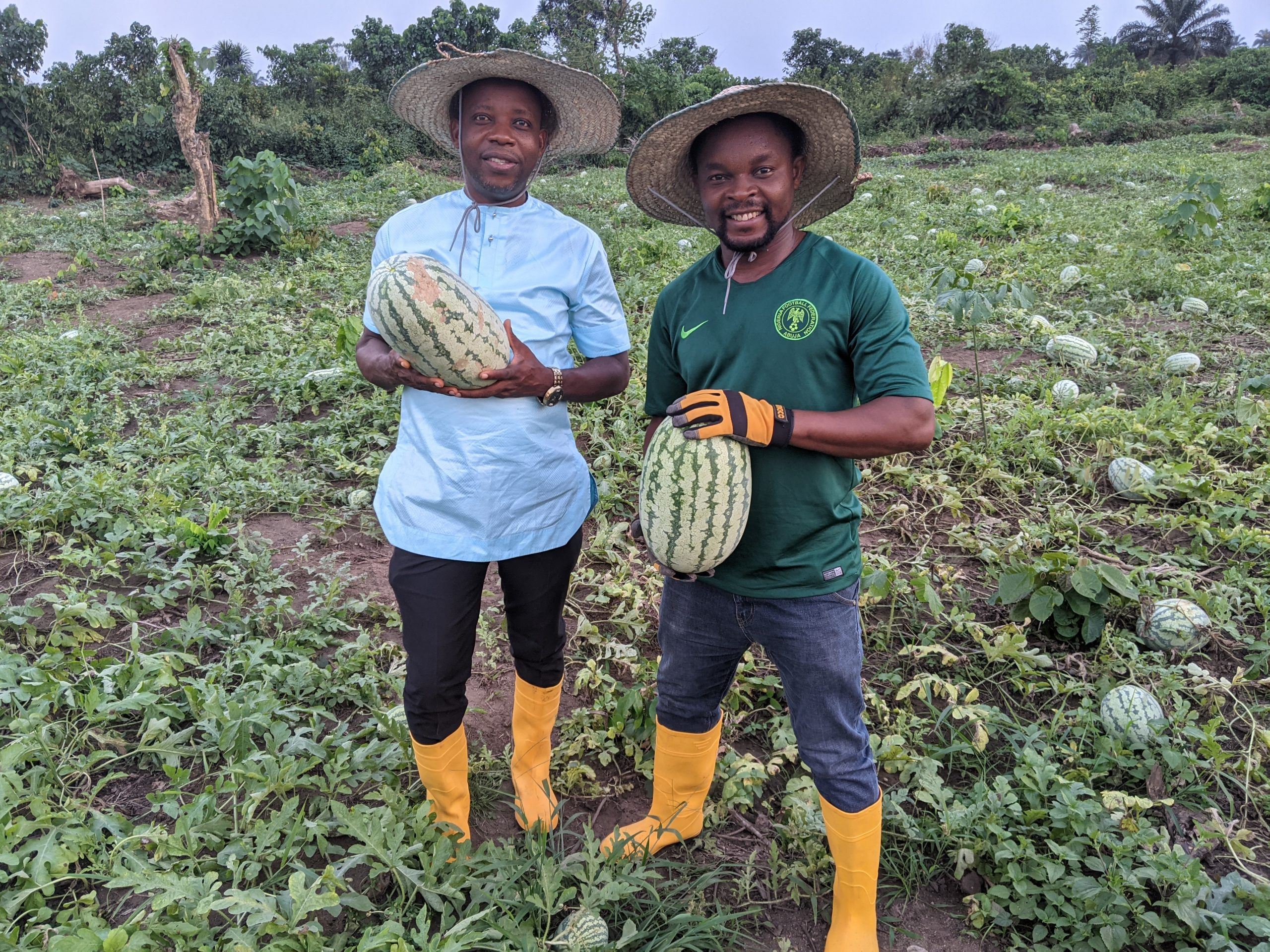 Watermelon Harvest at Croftop Farms - A Starthub Women Project
